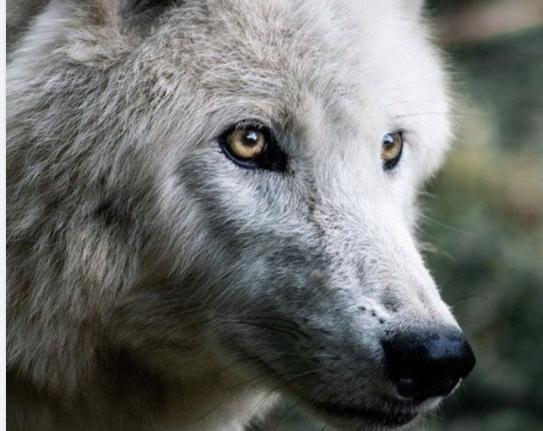 一匹狼になっていますか?